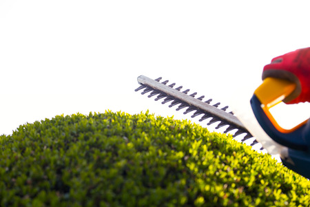 bush trimming: Cutting a hedge with electrical hedge trimmer. Selective focus
