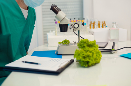 genetically: Testing of genetically modified food in the laboratory, selective focus