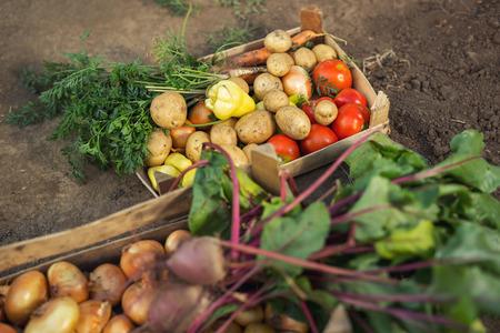 유기 신선한 농산물 상자