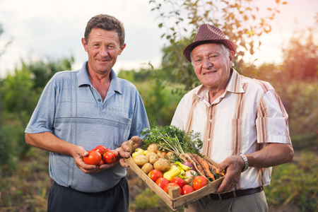 Senior men with harvested vegetables in the garden