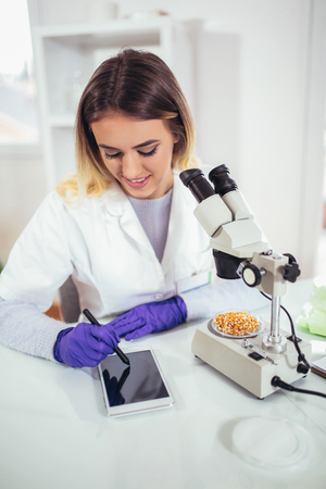 Female scientist looking corn for genetic modification research in laboratory