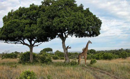 Detail of Kenya, Africa during Spring 2005 Stock Photo - 6236193