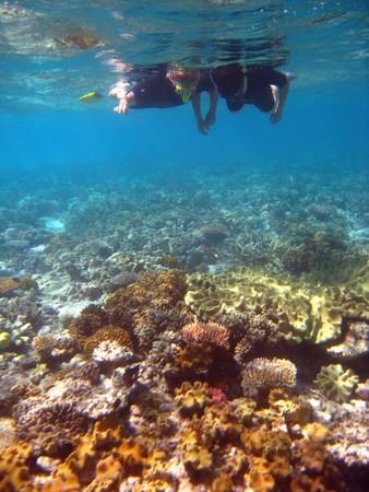 Underwater Scene of Great Barrier Reef in Queensland, Australia Stock Photo - 6969245