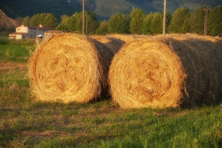 Bales of Hay in a Tuscan Meadow, Italy Stock Photo - 7135079