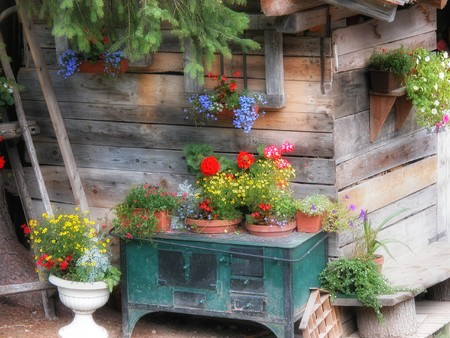 cottage garden: A typical Cottage inside the Dolomites Mountains