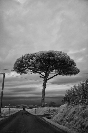 Countryside in Tuscany, Italy, Infrared Black and White Picture photo