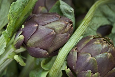 Colors of Artichokes in Tuscany, Italy Stock Photo - 7397246