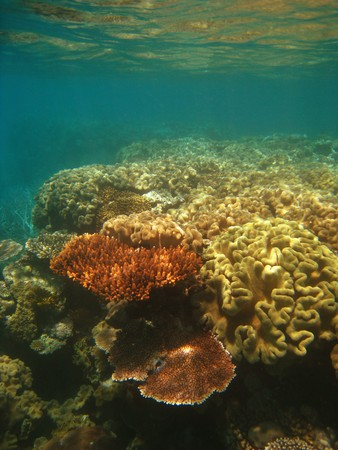 Underwater Scene of Great Barrier Reef in Queensland, Australia Stock Photo - 7463602