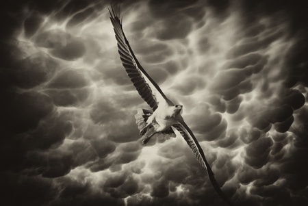 stormy sky: Eagle in the Stormy Sky Stock Photo