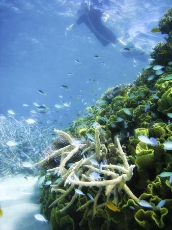 Underwater Scene of Great Barrier Reef in Queensland, Australia Stock Photo - 9498877