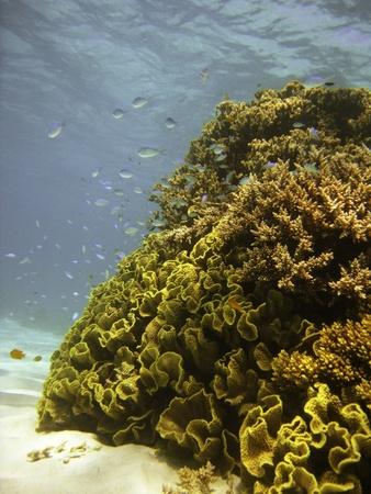 Underwater Scene of Great Barrier Reef in Queensland, Australia Stock Photo - 9607873