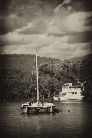 Coast near Port Douglas, Northern Queensland, Australia photo