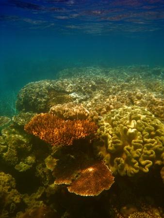 Underwater Scene of Great Barrier Reef in Queensland, Australia Stock Photo - 9729602