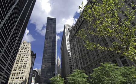 New York City Skyscrapers and Vegetation, U.S.A.