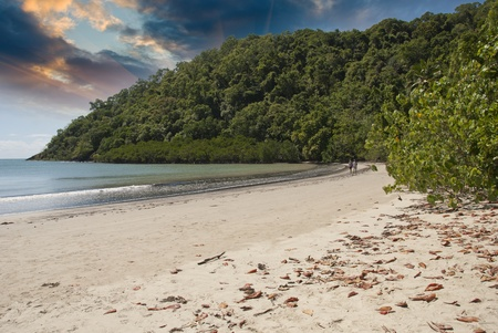Vegetation and Ocean in Cape Tribulation, Australia Stock Photo - 11986907