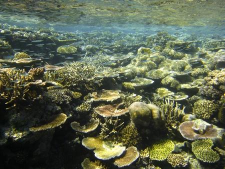 Underwater Scene of Great Barrier Reef in Queensland, Australia Stock Photo - 12452505