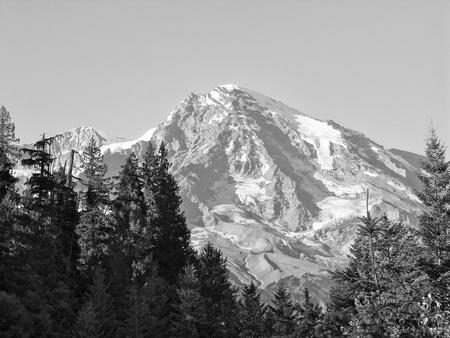 Vegetation near Mount Rainier, Washington photo