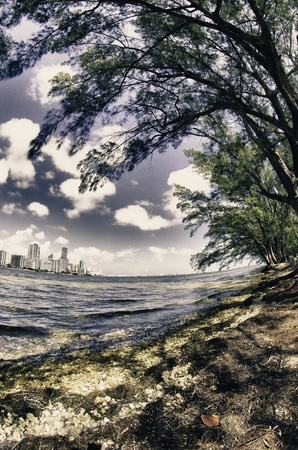 Trees and Miami view from Hobie Island, U S A  photo