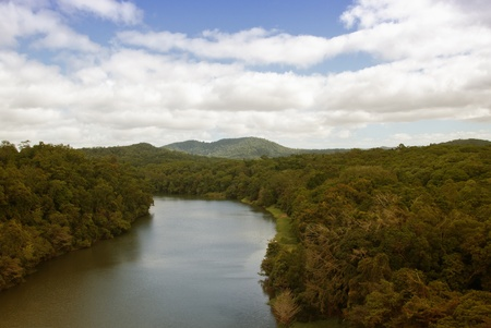 Rai n Forest near Kuranda Village, Queensland, Australia photo
