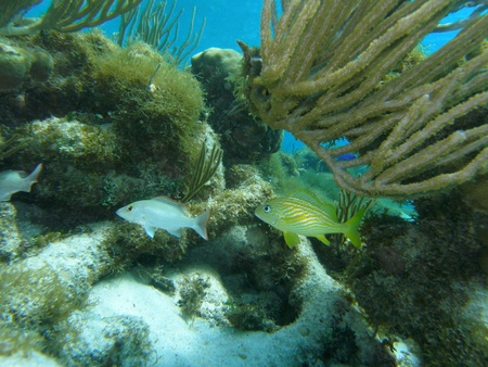 Flora y Fauna del Mar Caribe, Gran Caim�n photo