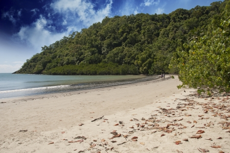 Vegetation and Ocean in Cape Tribulation, Australia photo