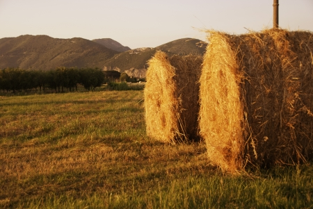 Bales of Hay in a Tuscan Meadow, Italy photo