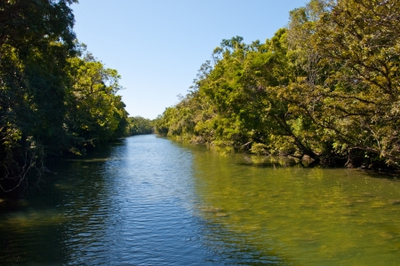 daintree: Vegetation of Daintree National Park, Australia Stock Photo