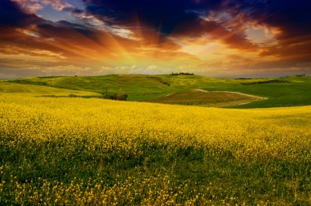 Landscape and Meadows of Tuscany in Spring, Italy 版權商用圖片