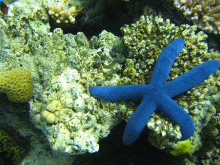 Underwater Life of Great Barrier Reef, Australia photo