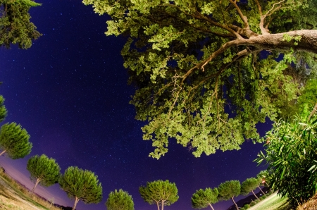 Trees and vegetation of Tuscany at Night, Italy photo