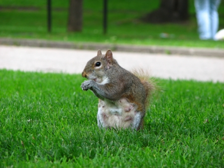 Squirrel in a Park, London photo