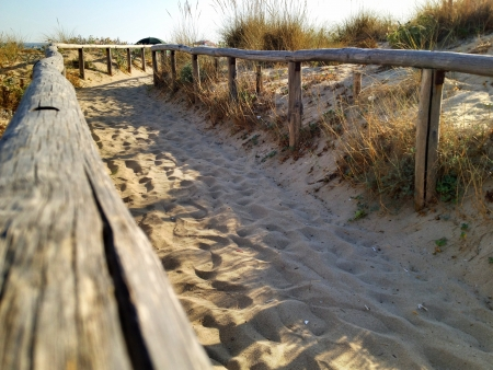 Vegetation and Sand of Apulia Beach - Italy photo