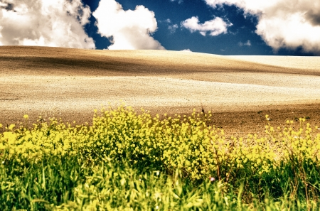 Colori Meadows di primavera toscana, Italia photo
