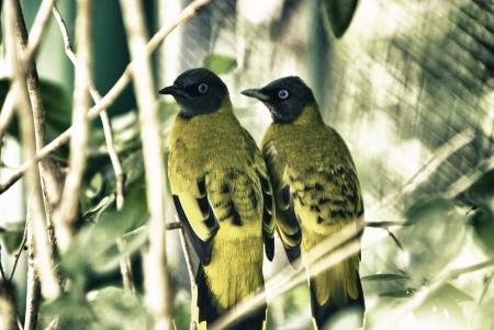 Birds Park in Kuala Lumpur, Malaysia photo