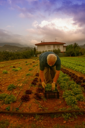 Proud farmer cultivating vegetable in his garden photo