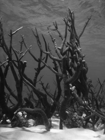 Underwater Scene of Great Barrier Reef in Queensland, Australia Stock Photo - 17032163