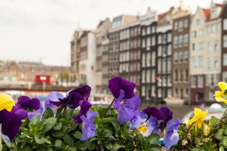 Colourful Flowers and Amsterdam typical Buildings, Netherlands  Stock Photo - 19449942