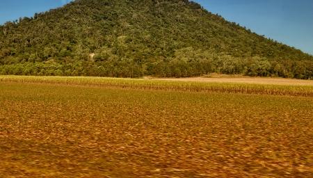 airlie: Queensland countryside near Airlie Beach, Australia.