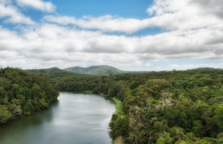daintree: Rain Forest in Daintree National Park - Queensland, Australia. Stock Photo