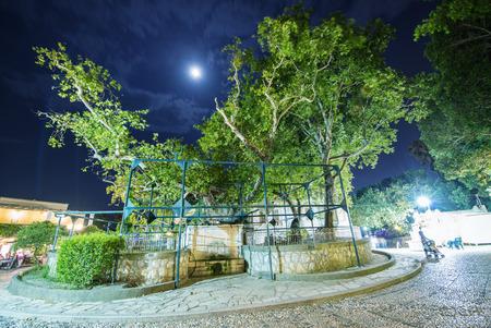 hippocrates: Hippocrates plane tree in Kos Island at night, Greece.