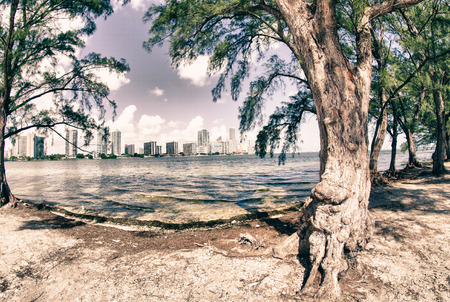 hobie: Trees and Miami view from Hobie Island, U.S.A.