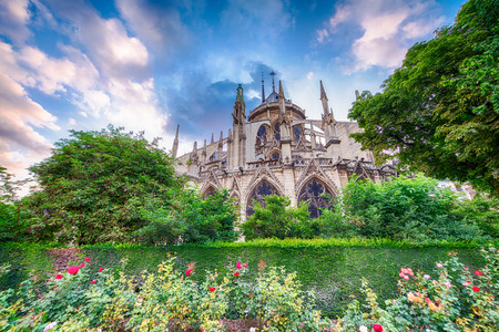 notre dame cathedral: Beautiful Notre Dame Cathedral view with garden and flowers - Paris.