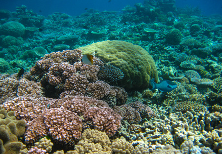 great barrier reef marine park: Underwater sea life in Queensland. Australian Coral Reef. Stock Photo