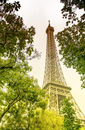 la tour eiffel: La Tour Eiffel, Paris. Landmark surrounded by trees in summer.