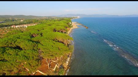pinewood: Pinewood along the sea, aerial view. Stock Photo