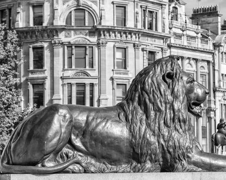 trafalgar: Lion statue of Trafalgar Square, London. Editorial