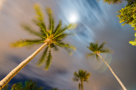 monsoon clouds: Waving palms at the wind, night light.