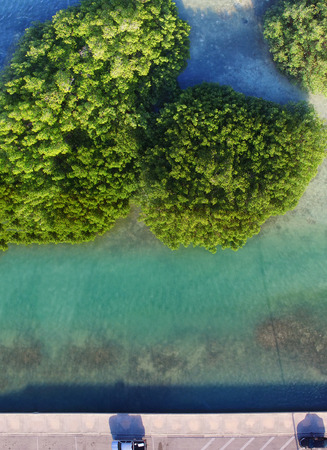 Beautiful overhead view of mangroves in the ocean.
