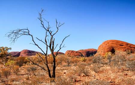 territory: Australian Outback vegetation, Northern Territory. Editorial