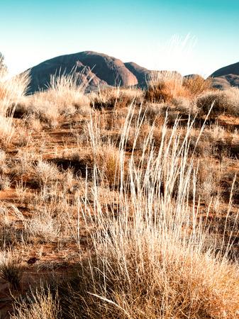 australian outback: Australian Outback vegetation, Northern Territory. Stock Photo